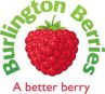Burlington Berry Logo LARGE